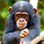 Refusing to Kiss the Chimp—Professionals, Crazy Stunts, and High-Stakes Testing