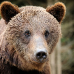 Students and Bears, Oh My! How Common Core Discards the Importance of Reasoning and Intuition