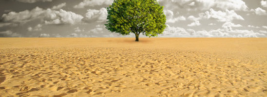 A green tree alone in sand desert